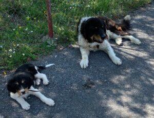 «Φόλες» σε Σκυλιά – Αντιμετώπιση – Ενημέρωση